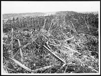 Part of the wire entanglements in front of the Hindenburg line