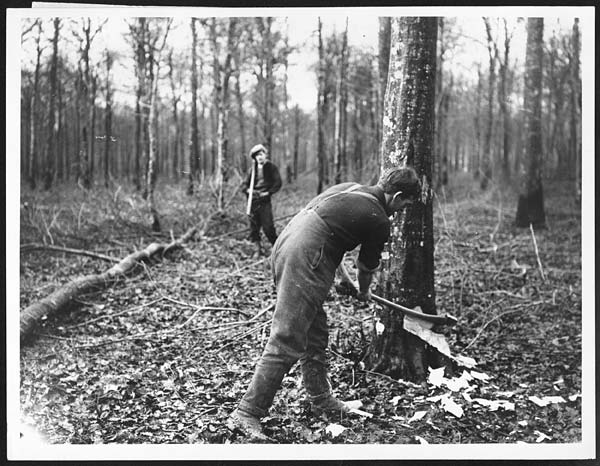 (484) D.669 - British Tommy felling a tree