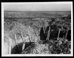 C.1045German communication trench near Beaumont Hamel